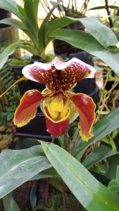One of 2,000 kinds of orchids at Finca Dracula.